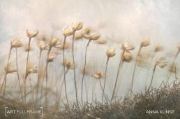 Anna_Kunst_Windy_Clifftop