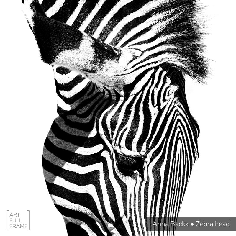 Art Full Frame Ann Backx Zebra Head