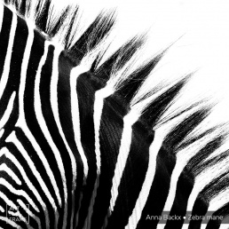 Art Full Frame Ann Backx Zebra Mane