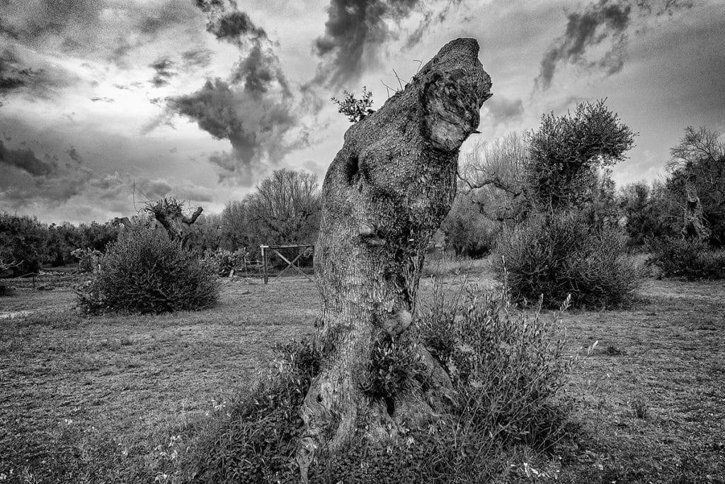 Antonio Perrone - Joker - ArtFullFrame artfullframe.com